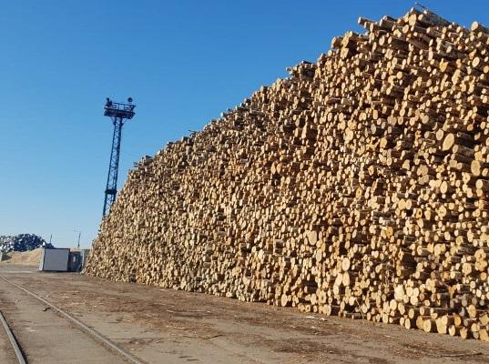 Финляндия в прошлом году больше всего импортировала леса из России